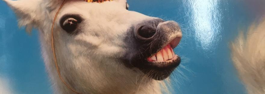 Funny Horse Unicorn